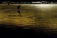 California Salton Sea I