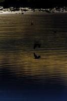 California Salton Sea II